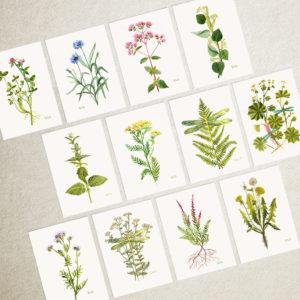 Zestaw 12 kart z roślinami – A6 lub A5